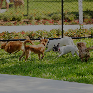 Large Dog Park at Candlestick Lane Apartments